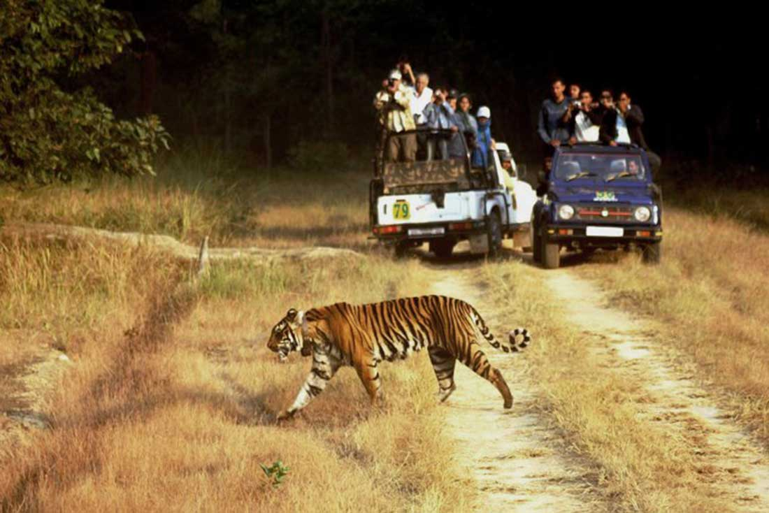 wildlife_tourism