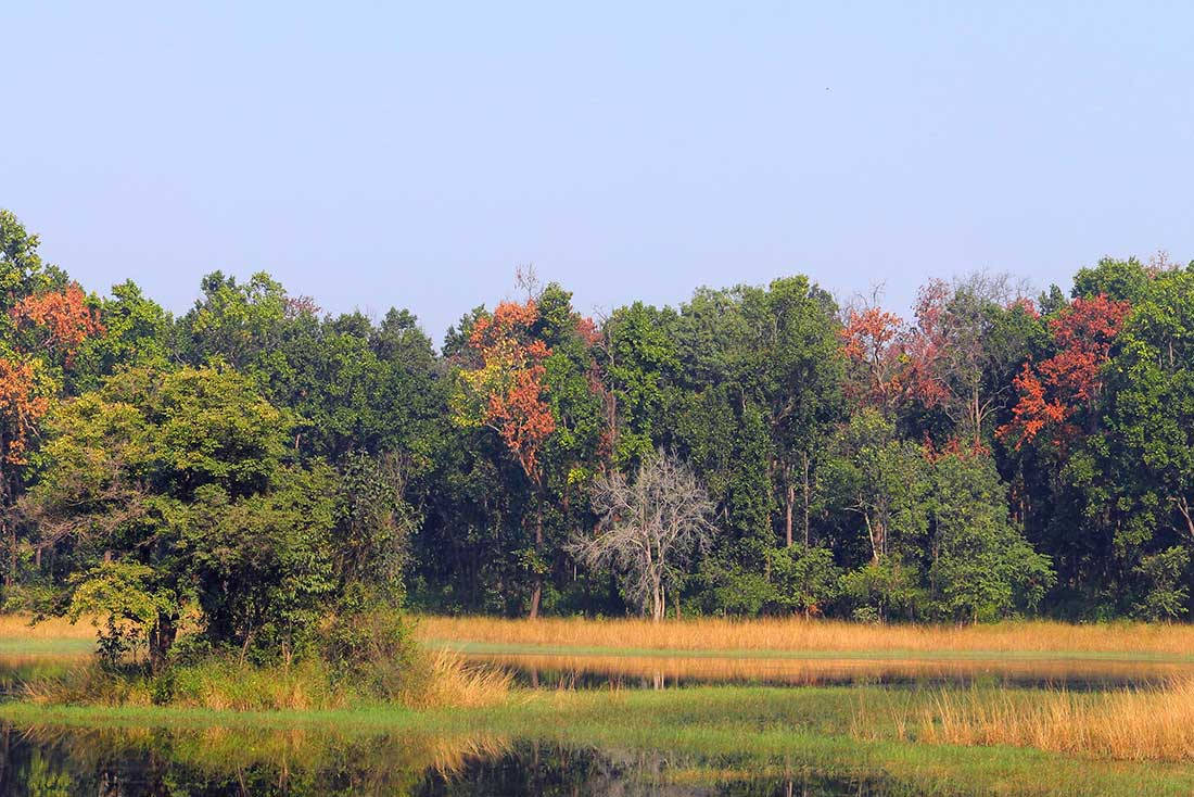 Wetlands-Blog-Pic