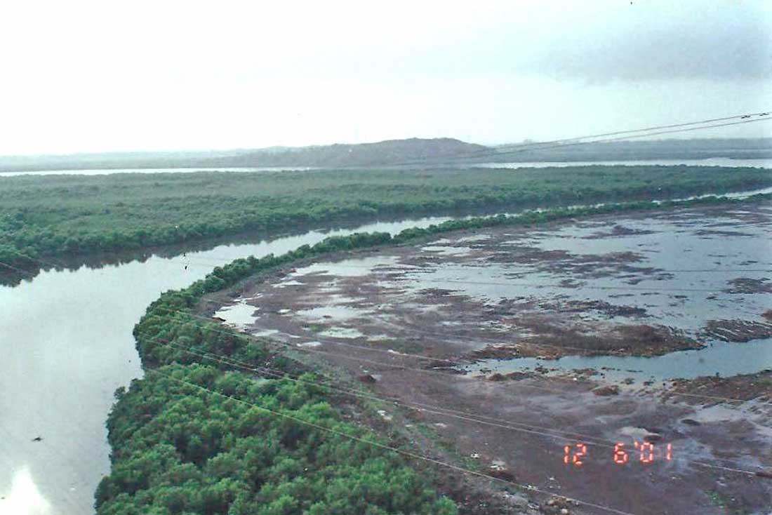 Mangrove Destruction at Lokhandwala