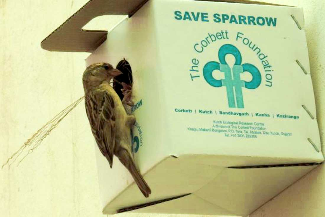 World-Sparrow-Day-Blog-Entry
